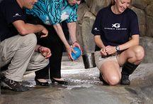 Celebrity Visits to Georgia Aquarium
