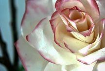 flores artesanato