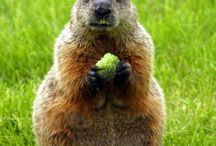 Groundhog Day Activities / Fun-filled day!
