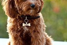 cuties doggie