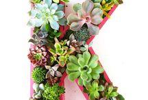 Succulents / by Kim Morgan