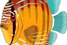 Fish Art & illustration
