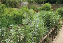 Allotment / Growing fruit, vegetables and flowers