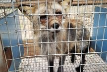 fuck fur/cruelty free