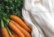 daucus carota / Photography - Story : natural dye process with carrot's fresh leafy stem