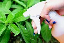 inseticida natural para suas plantas