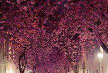 Street trees