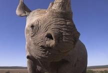 A030- wildlife & extinction..