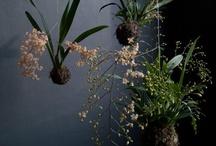 Kukkataide:Kokedama / Japanilaista kukkataidetta