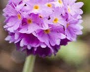 Small infinite / little flower