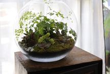 Fairy Gardens and Terrariums / by Teresa Stoll