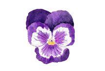 [art] Florals