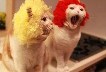 cattss