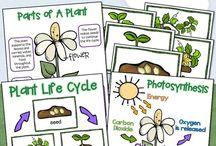 Škola prvouka flora