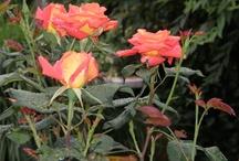 wat is er te zien in mijn tuin? / Ik maak graag regelmatig foto's van mijn tuin.