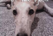 Doggie dog dog / the pups