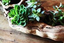 planters / flowerspot