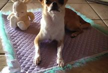 Sparkling dog's mat