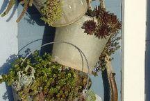 Garden, patio ideas