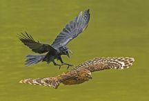 Stunning Animal Photography