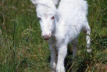 Albino animals / Animals