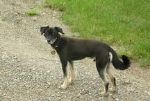 Mon petit chien Pogo