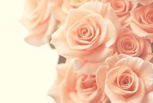 ⋆❋ Peach
