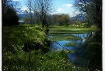 .:River.Streams.Water:.