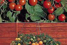 Bahçe vs.