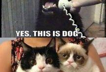 Funny pics/gifs / Funny pics and gifs