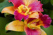 orchids / by Lizbeth Novelliere
