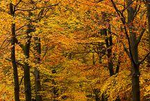 Natuur / Hier ziet u beelden over de natuur