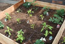 A - Square Foot Gardening / by Betsy Pedersen