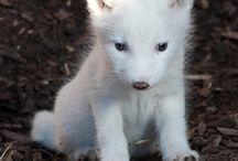 animals / by Kimberly Wright