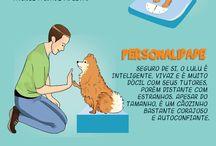 Sonho de Cachorro