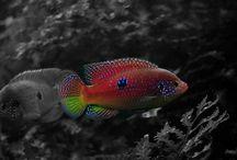 Fish World / Different Freshwater Fish Species...