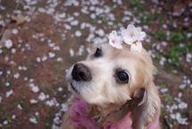 꽃개 dogs and flowers / DOG, COCKER SPANIEL, WINNIE,  내 강아지 위니와 꽃, 그 외의 꽃개 사진 모음