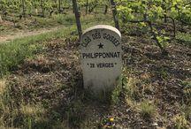 Vignobles, Domaines, Châteaux et Maisons / Focus sur les meilleurs domaines Viticoles de France et du Monde. Plongez au coeur de leurs univers avec nous !