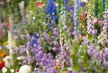 amazing gardens.