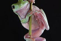 Mr.&Mrs. Frog