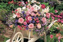Garden / Various
