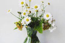 Seviyor? Sevmiyor?  / Seviyor? Sevmiyor? diye düşünmeyi bırakın! Sevginizi ifade edeceğiniz en güzel çiçek tasarımları çok yakında escicek.com'da! #escicekcom #flowers #çiçeğinyeniesintisi #esçiçek #yakında
