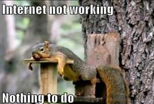 A squirrels life / I know you'll love these cute/funny animals!!