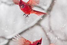 Julfåglar