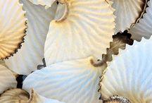 ☼ mušličky ☼ / a iné morské poklady