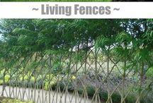 živé ploty, oplocení