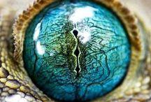 olho reptil