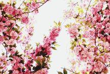 Branches in Bloom - Virágzó ágak