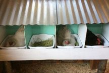 NESTING TUBS. REMOVEABLE N CHICKEN COOPS