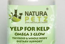 Yelp for Kelp / Yelp For Kelp is used holistically for its content of 25+ fish, fatty & amino acids, bio-available proteins, micro & macro vitamins & trace minerals to promote endocrine & thyroid function; for thyroid disorders including hypothyroidism & goiter; to maintain healthy levels of TSH, T3 & T4, to support proper metabolic rate & for metabolic disorders; to support pancreatic function; to cleanse the lymphatic system & for healthy skin, coat, nails & teeth.